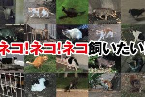 野良猫,画像,無料