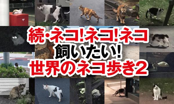 世界ネコ歩き2,岩合光昭,ネコ,猫,ねこ,野良,ネコ飼いたい