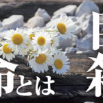 アイドル,松本人志,自殺,愛の葉Girls,大本萌景