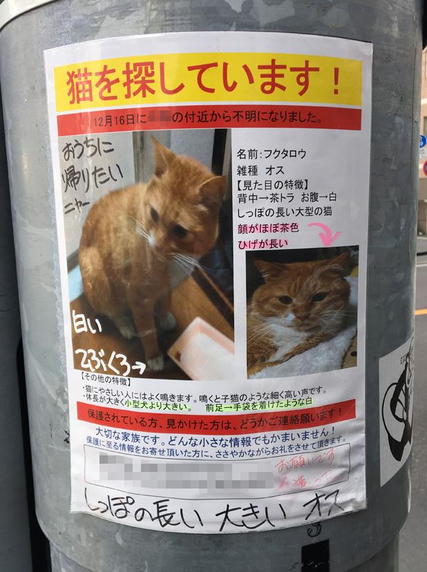 迷い猫,犬,行方不明,探してます,保護,鳥,チラシ